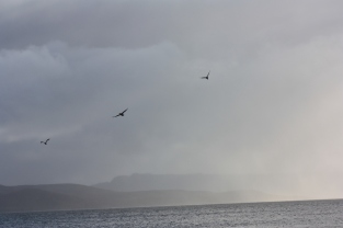 Cormorants getting out of the way on the oncoming rain